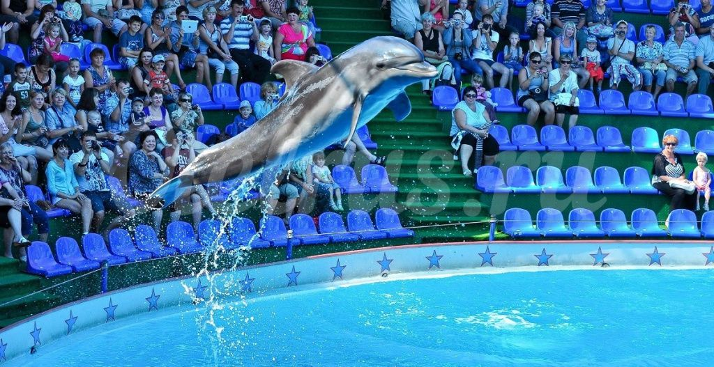 image-dolphin